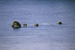 She-bear with three cubs fishing for salmon in the lake