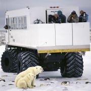 Polar bear mother and cub at the Tundra Buggy (00090032)