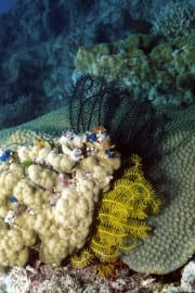 Colorful feather stars