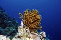 Exposed feather star