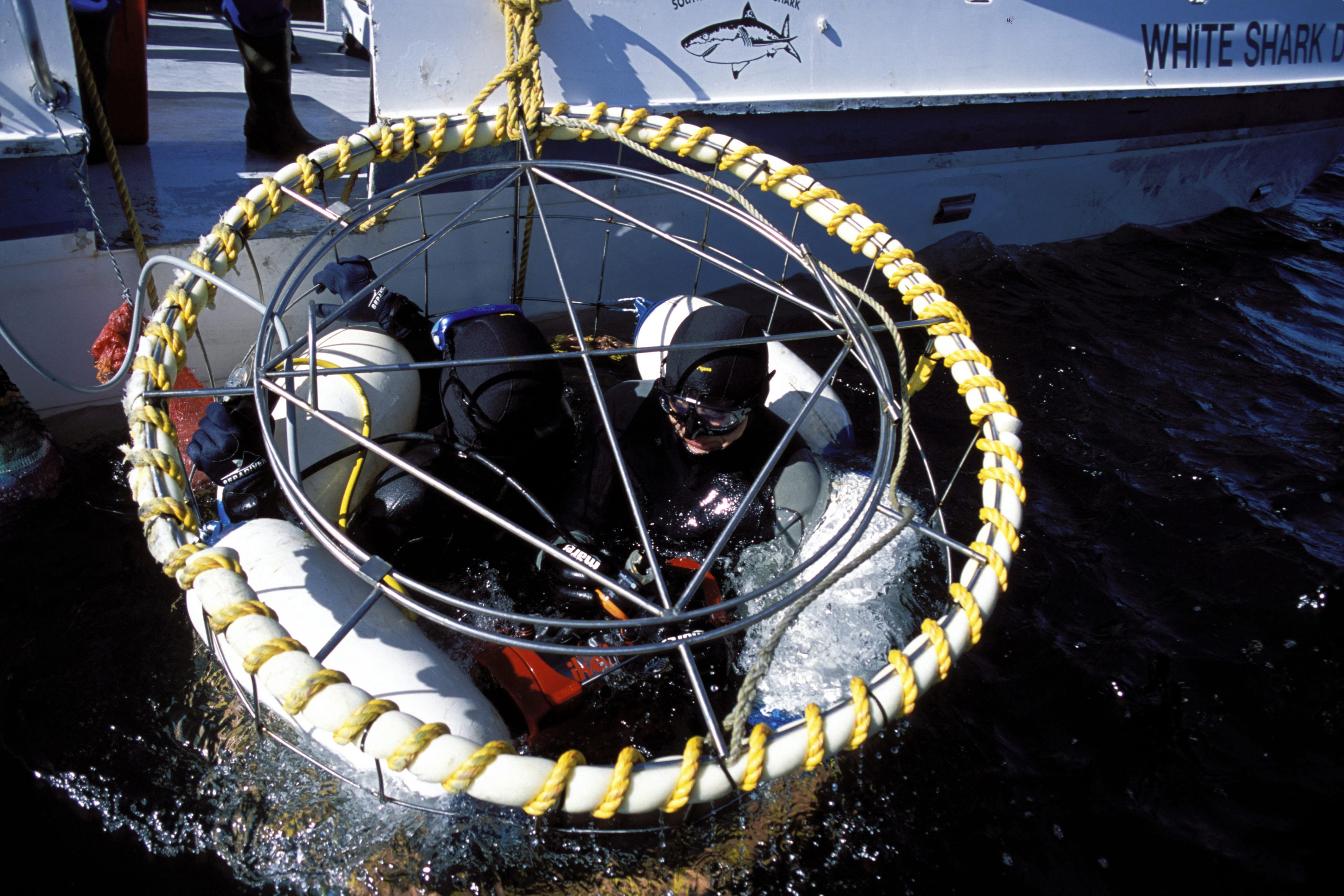 Shark cage with diver