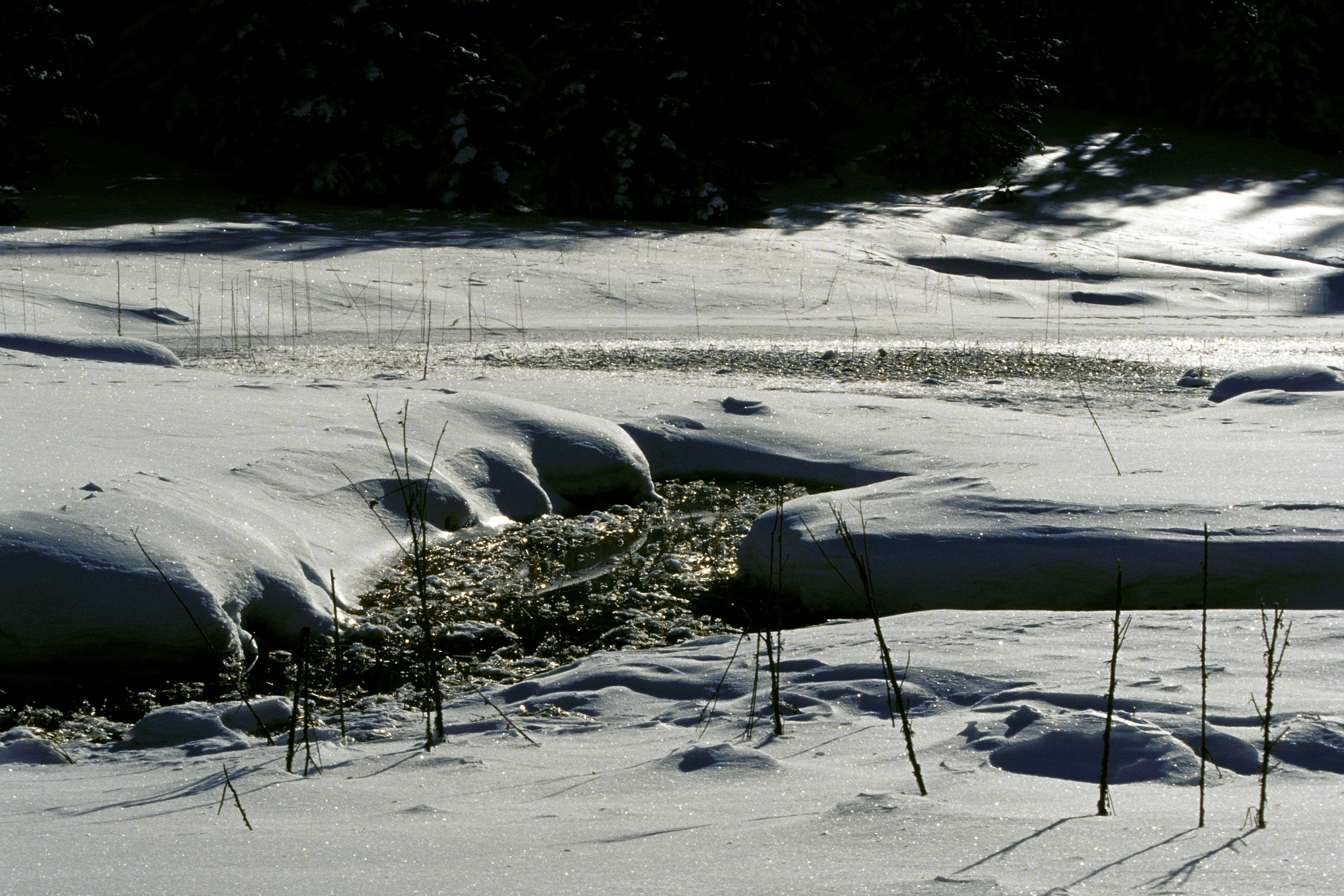 Hochmoor im Winter (00007741)