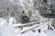 Snow-covered brook bridge (00007798)